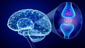 neurotransmetteurs et problèmes de poids